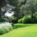 Scarificateur: Le MUST pour votre pelouse